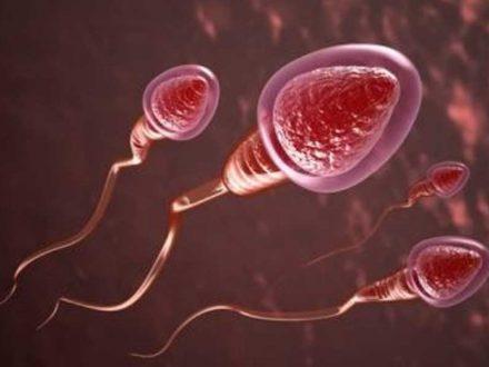 Analiza e spermës dhe pyetjet e shpeshta