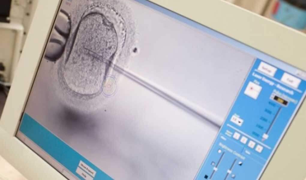 Embriyo Gelişiminin Canlı Olarak İzlenmesi ve İnkübasyonu