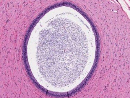 Laboratuvar Koşullarında Embriyolar Nasıl Takip Ediliyor?
