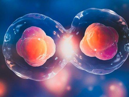 Embriyo Gelişimi ve Rahime Tutunma